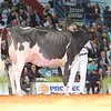 Cremona16_Holstein_L32A7266