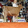 Cremona_Jersey_Show_2016_L32A5837