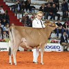 Cremona_Jersey_Show_2016_L32A5835