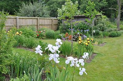 2013 Lilacs Flowers