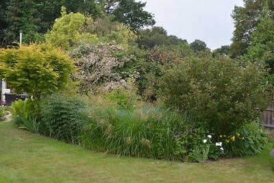 Lilacs Garden June 2018