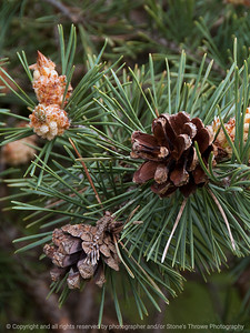015-pine_cone-ankeny-07may16-09x12-001-8583