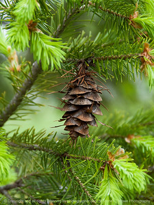 015-pine_cone-ankeny-07may16-09x12-001-8591