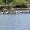 Crew2012-6