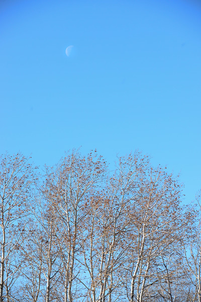 Blue Sky Moon at Crex Meadows