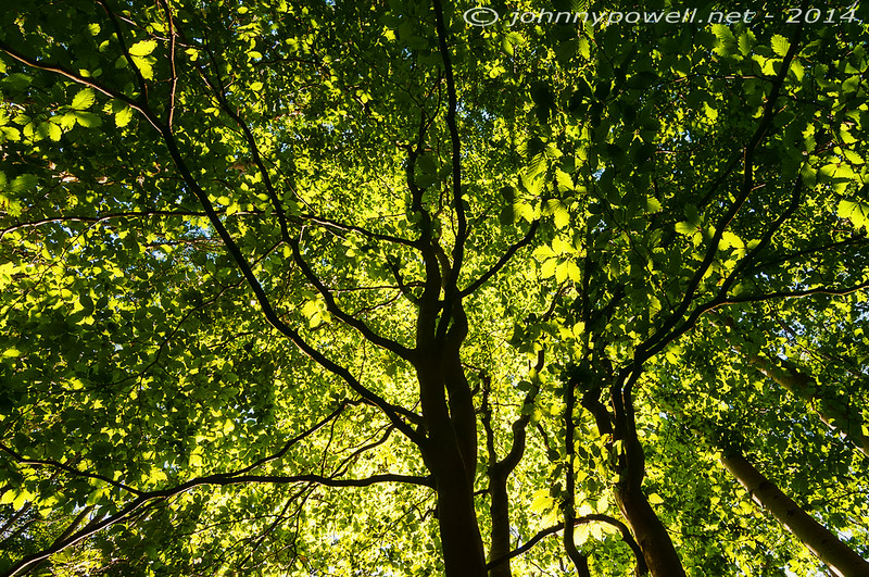 Bushbarn Wood