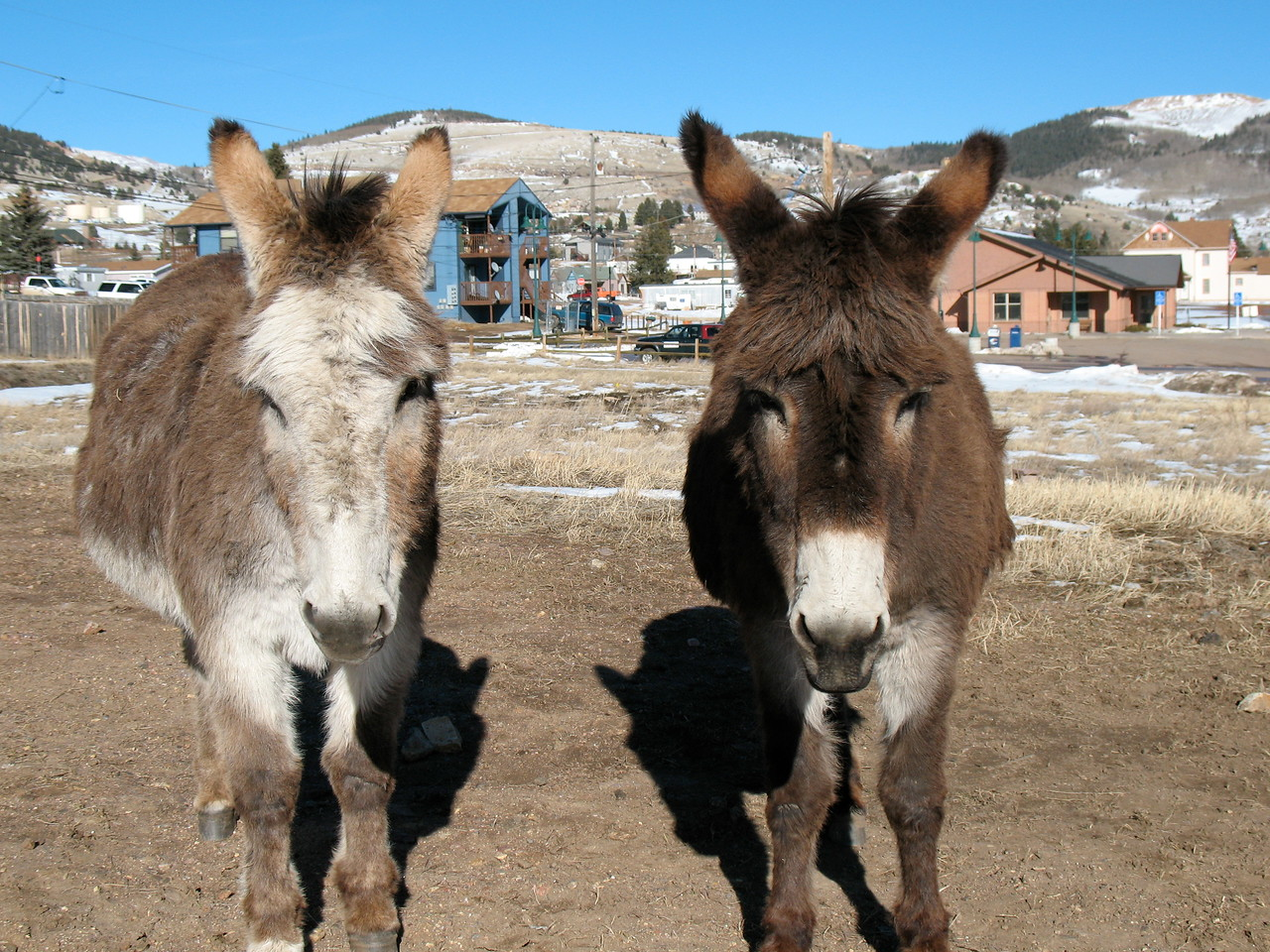 Dynamic Donkey Duo