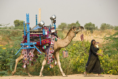 Rabari Woman on the Move, Rann of Kachchh, Gudjarat, India