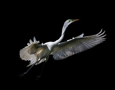 Landing Heron After