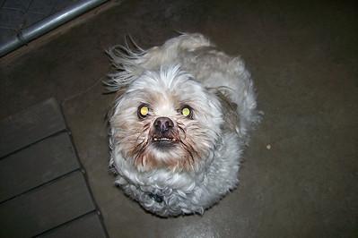 Chewie B