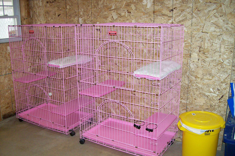 Our cat campers have their own room off the office area.  It features private cat condos with multi level perches.  Our cat room is in the process of more upgrades.  We'll post photos as soon as it's completed!
