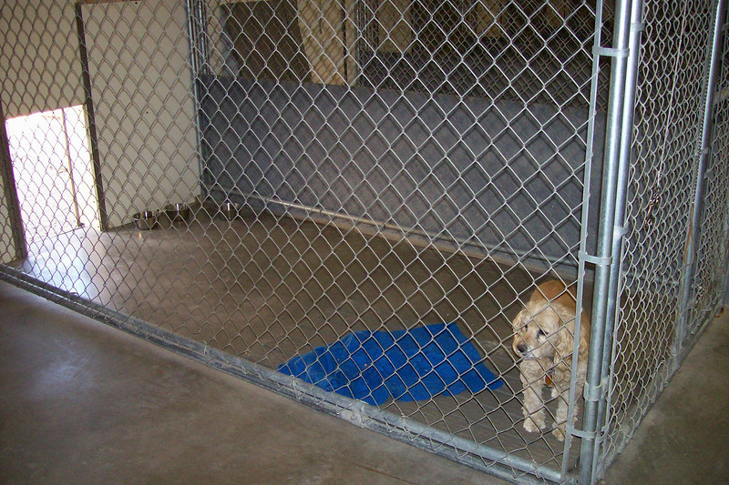 Our small dog kennels feature a 5' x 10' indoor area that is heated and air-conditioned.  A pallet is supplied in each kennel to keep the campers off the concrete and items from home are welcome.  Here's Puppy showing how the pallet works.