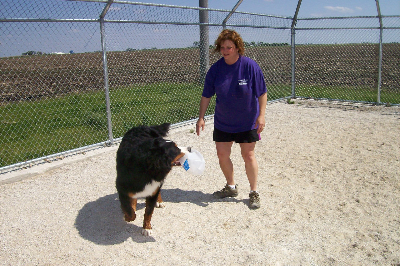 Tucker is playing keep away with one of staff members Darlene.  They are playing in the outdoor area of Puppy Park.