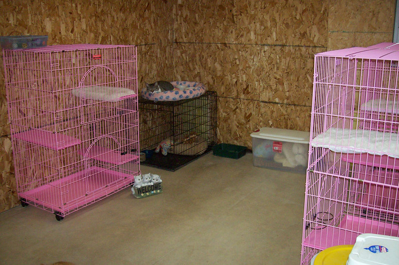 Here's another view of the cat room.  Dillon, our resident cat, it seen lounging around on top of his crate.