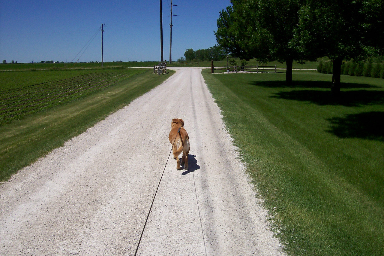 "Another option for ""Puppy Park"" is a walk around the Critter Camp grounds.  Sadie is enjoy a walk on a beautiful summer day."