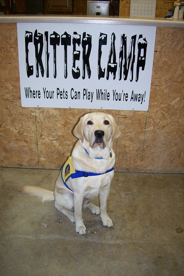 Doyle and the rest of the crew at Critter Camp thank you for visiting our virtual tour!