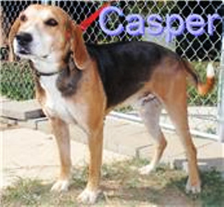 Critter Chronicles: Casper (2)