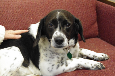 Domino, Friendship APL of Lorain County