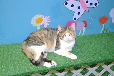 Kit Kat, Friendship APL of Lorain County