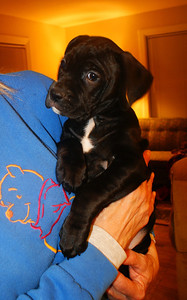 One of Zoey's pups, Erie Shores Humane Society