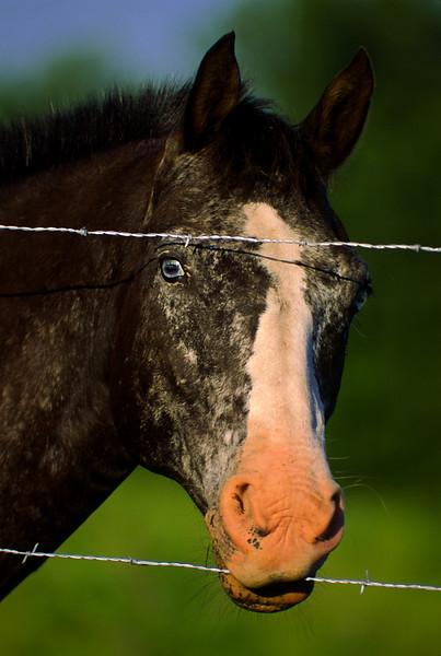 yummm, barbed wire taste good!