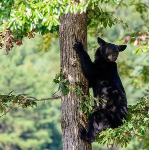 """Hey Bear"
