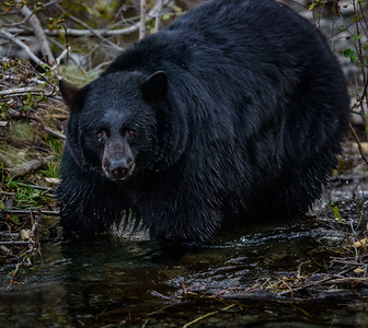 """Hey Bear!"""