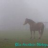 Big ol' Maverick in his pasture on a foggy day.