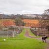 Back Pasture Aisleway