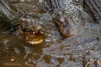 gators 10