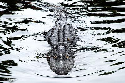 gators 02