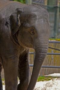 """Baby Elephant 'Kandula"""" #2"""