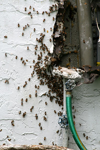 The bees are protecting the queen . . . and then they'll move on!!