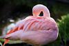 Flamingo<br /> Wildlife Safari, Oregon