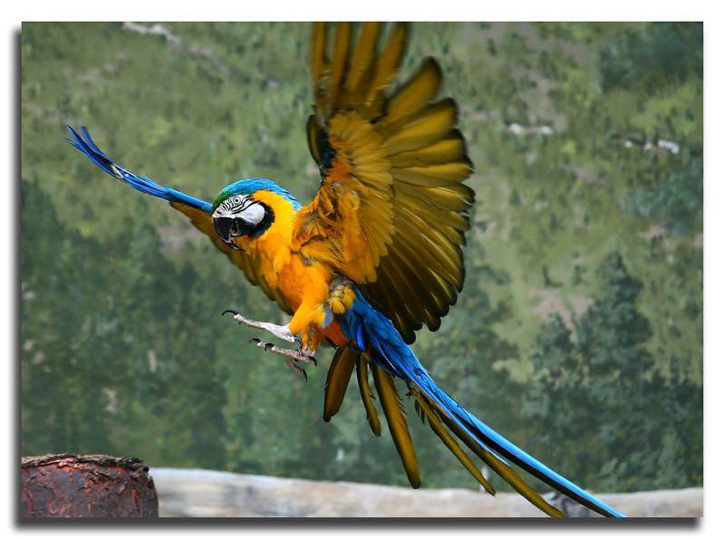 Macaw<br /> Oregon Zoo