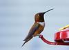 Hummingbird, Rufous or Anna's?<br /> Brush Prairie, WA