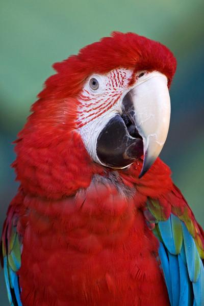 Parrot<br /> Portland zoo