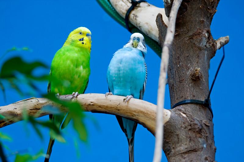 Parrakeets<br /> <br /> Seattle zoo