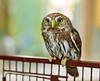 Happy Owl-o-ween!