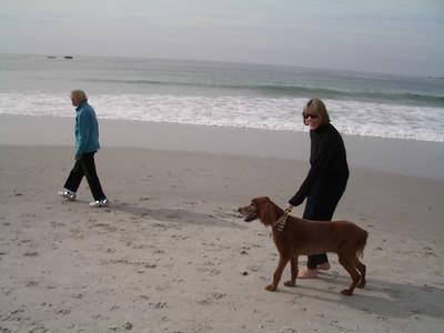 Beach with Brix