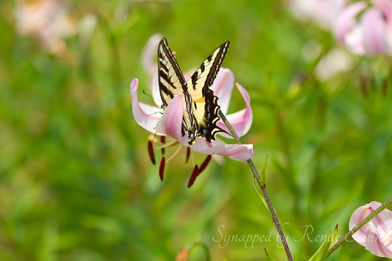 Swallowtail Jetson-mobile