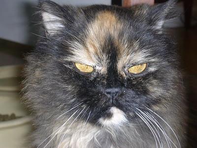 Debbie Cats 058