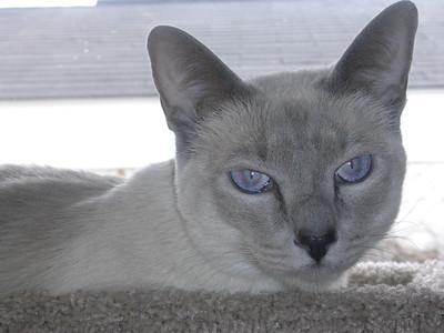 Debbie Cats 015