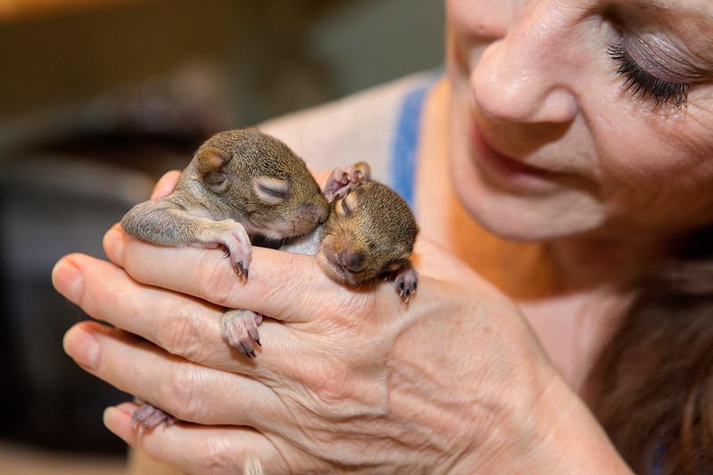 Squirrel Mama