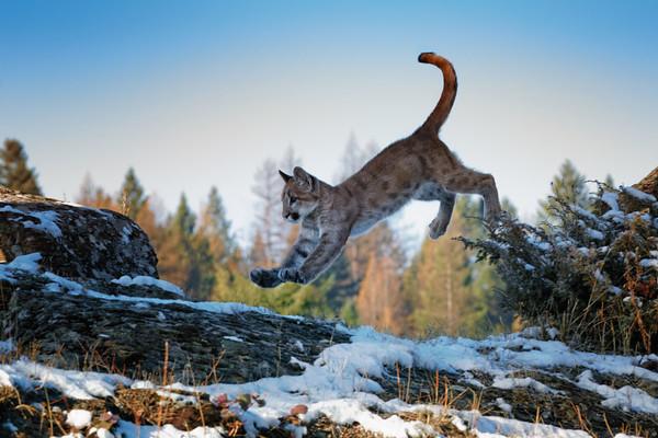 Jumping Jaxon