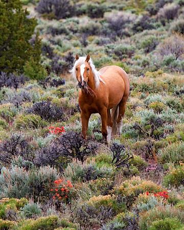 Munching Wild Horse