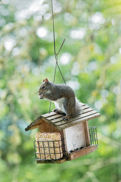 Do You Trust Your Squirrel to House Sit?