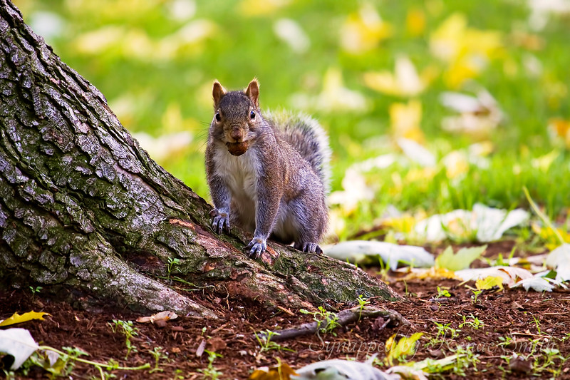 Who You Callin' Nuts?
