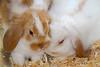 Hoppy Easter Bunnies