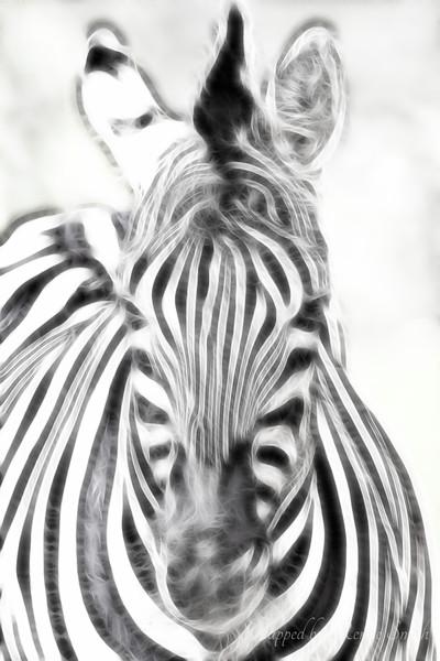 Zebra Fractalius